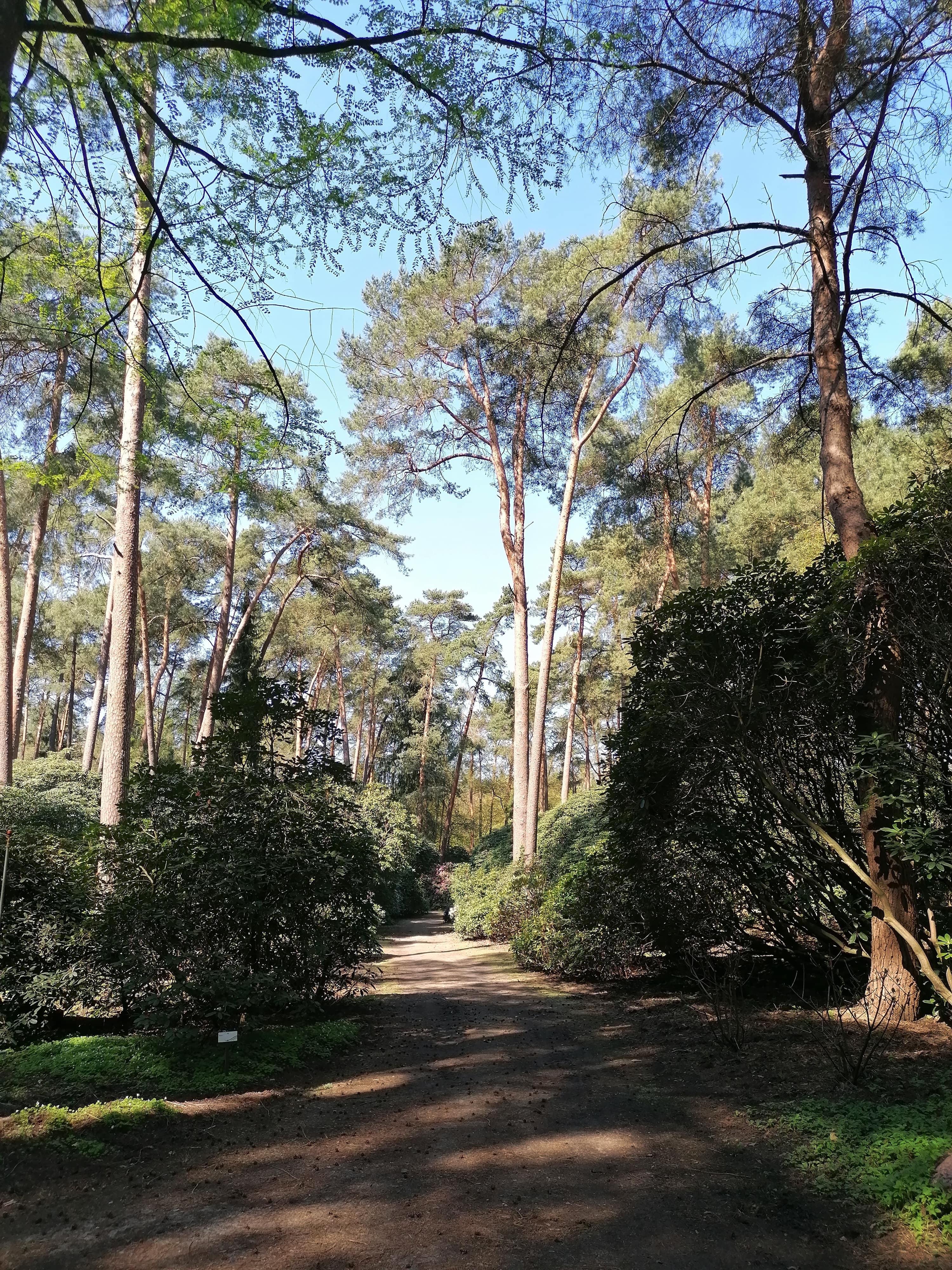 Herbstimpressionen im Rhododendronpark Bruns