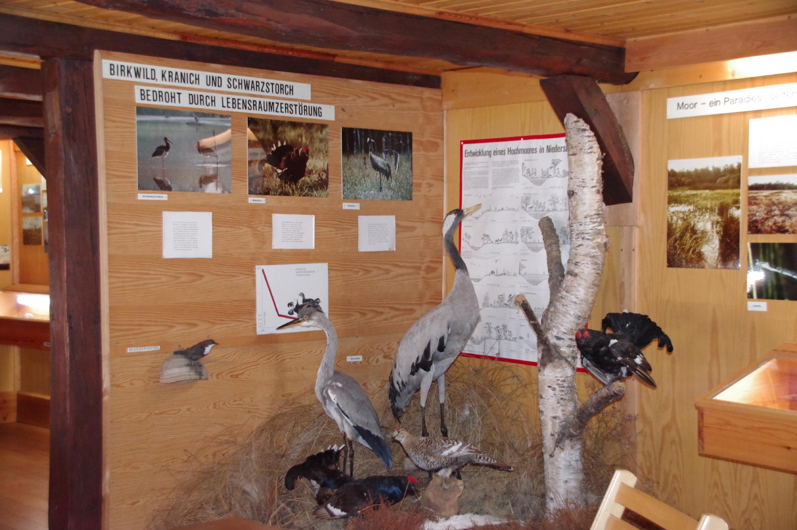 Haus der Landschaft Knesebeck Vogelausstellung