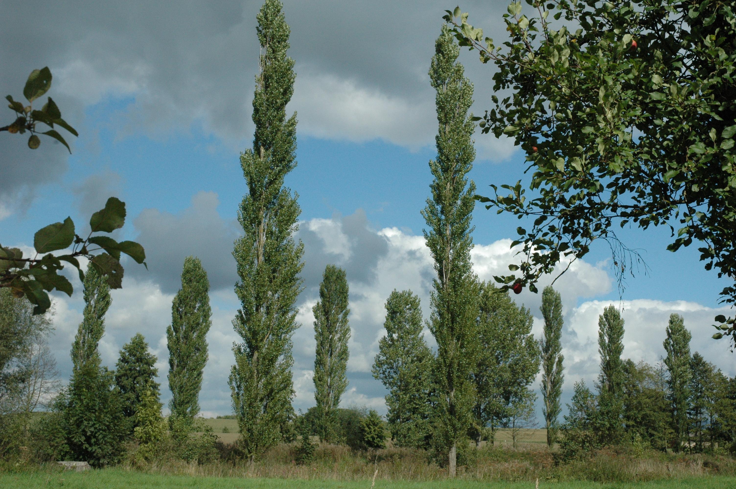 Baumbestand am Heubach