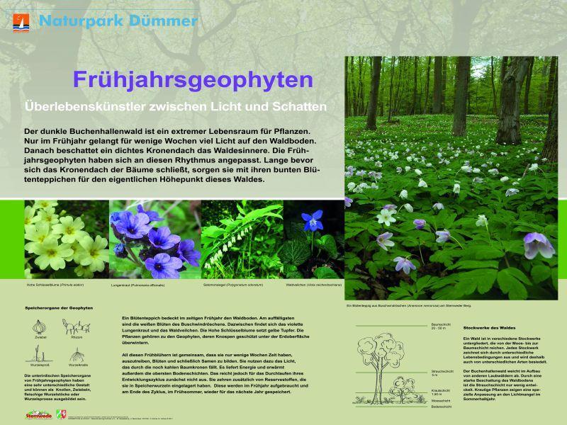 Infotafel Geophyten