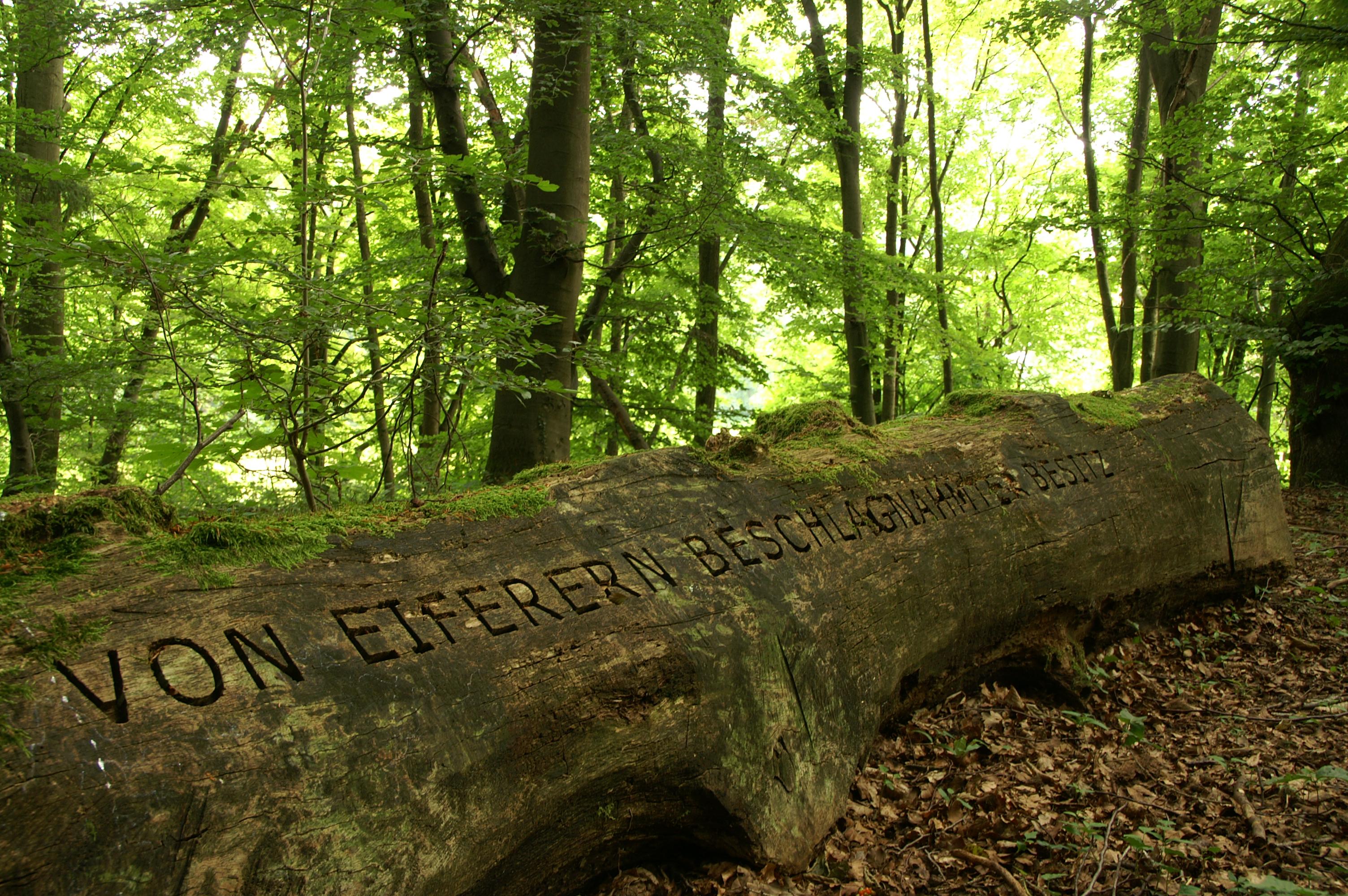 Sinnsprüche der Kaiserring-Trägerin Jenny Holzer zieren umgestürzte Stämme
