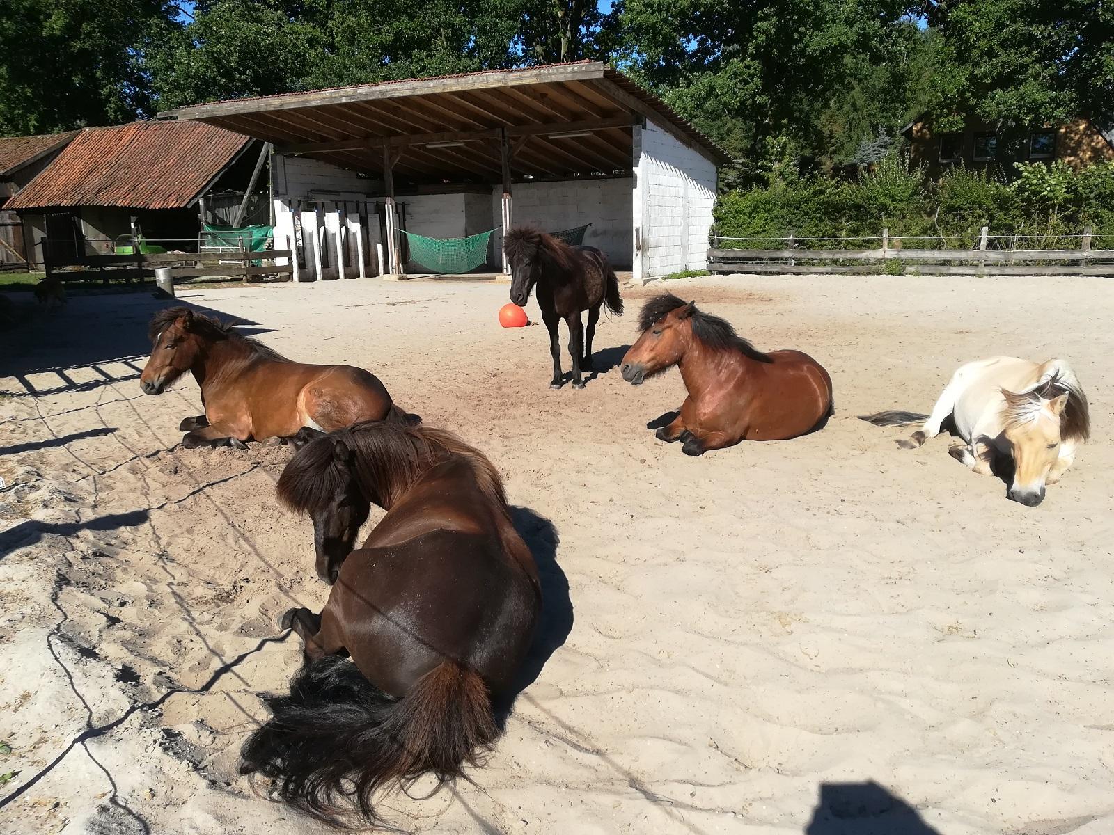 Pferdeauslauf Dennhornshof