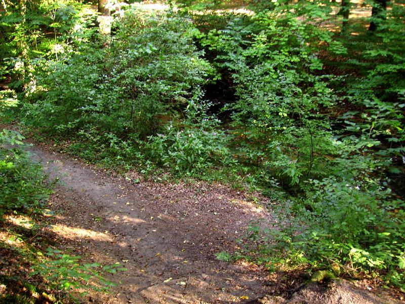 Schmale Waldwege