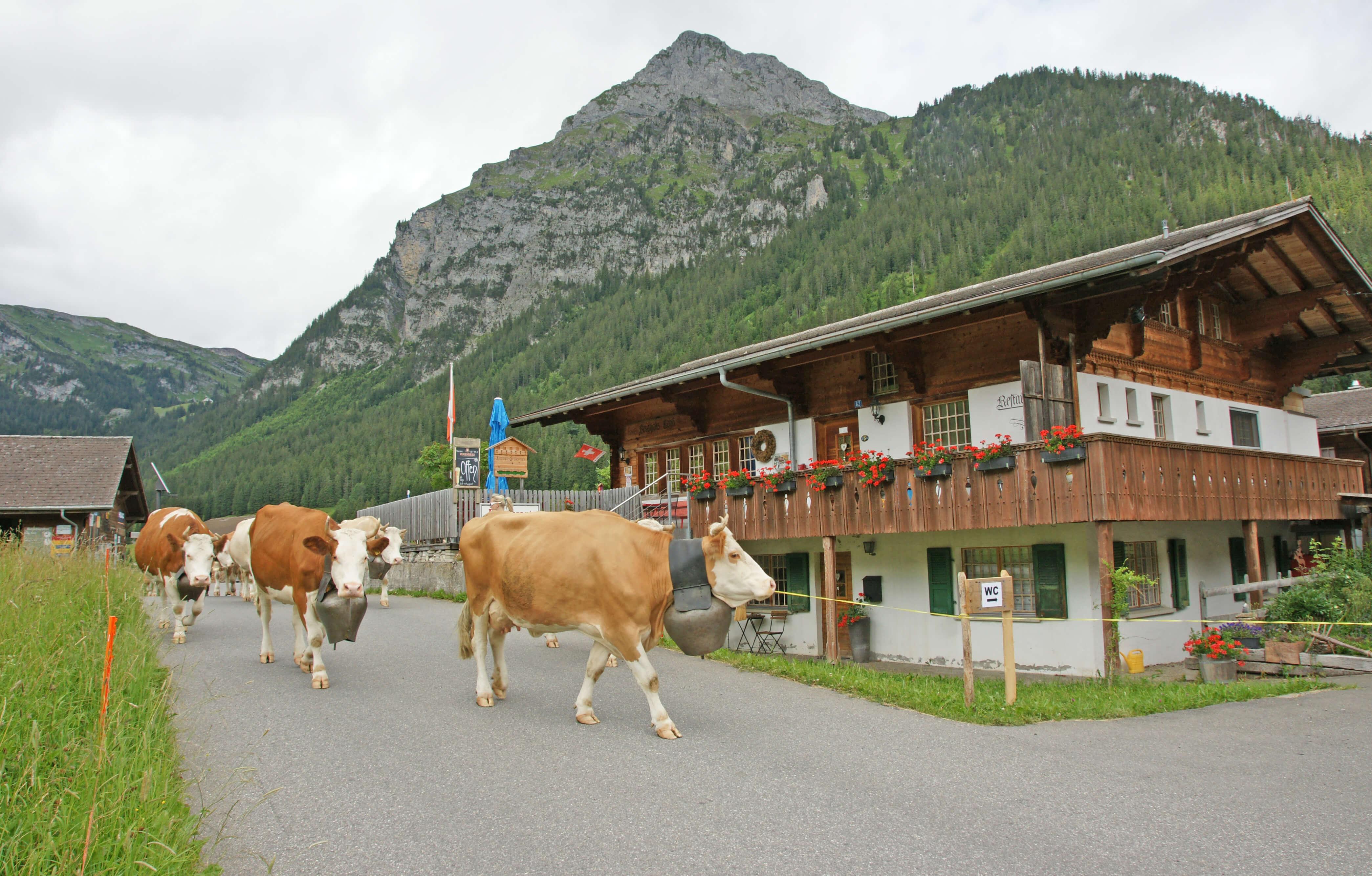 Alpaufzug Sommer