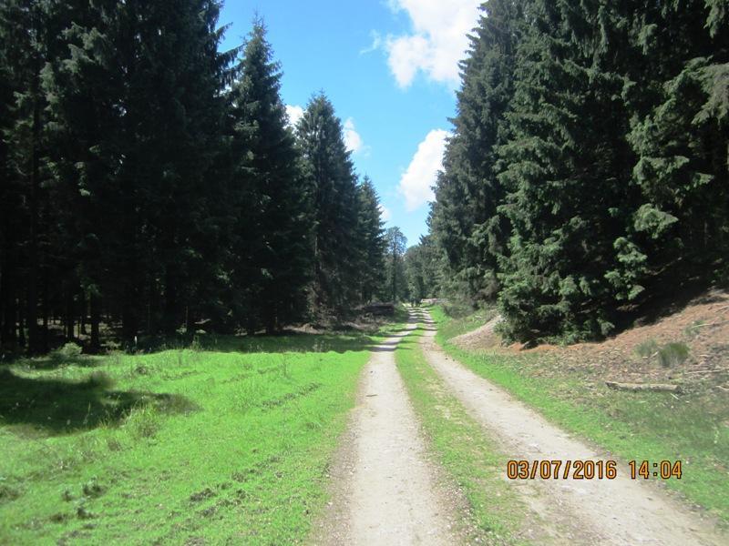 in den weiten Wäldern des Winnfeldes