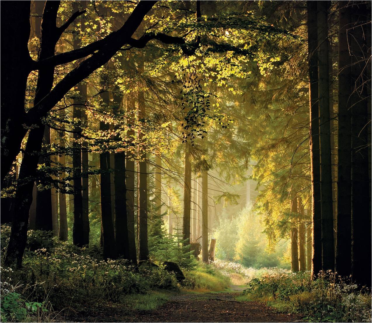Im Wald rund um den Goldberg