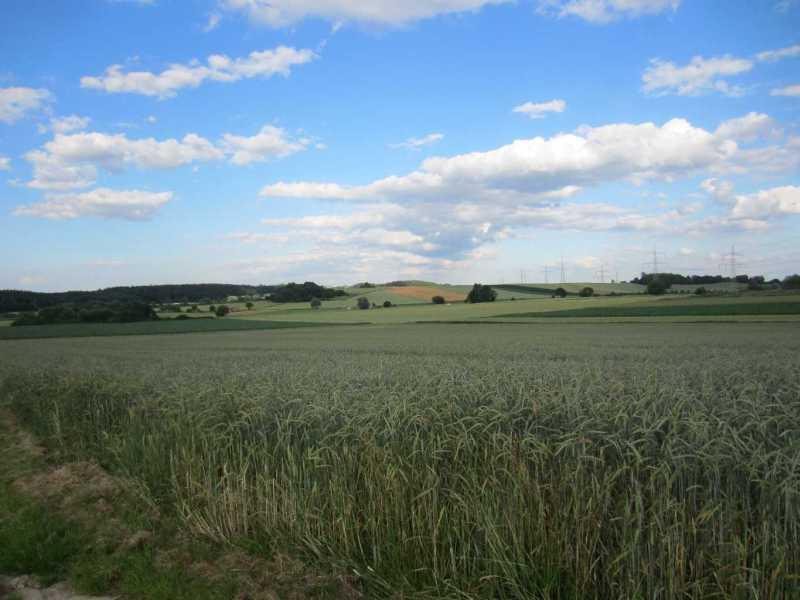 Blick auf die Felder nach dem Reiterhof Schwetzky Bellenberg