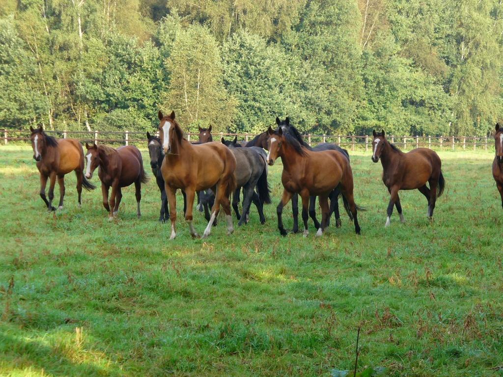 Senner Pferde