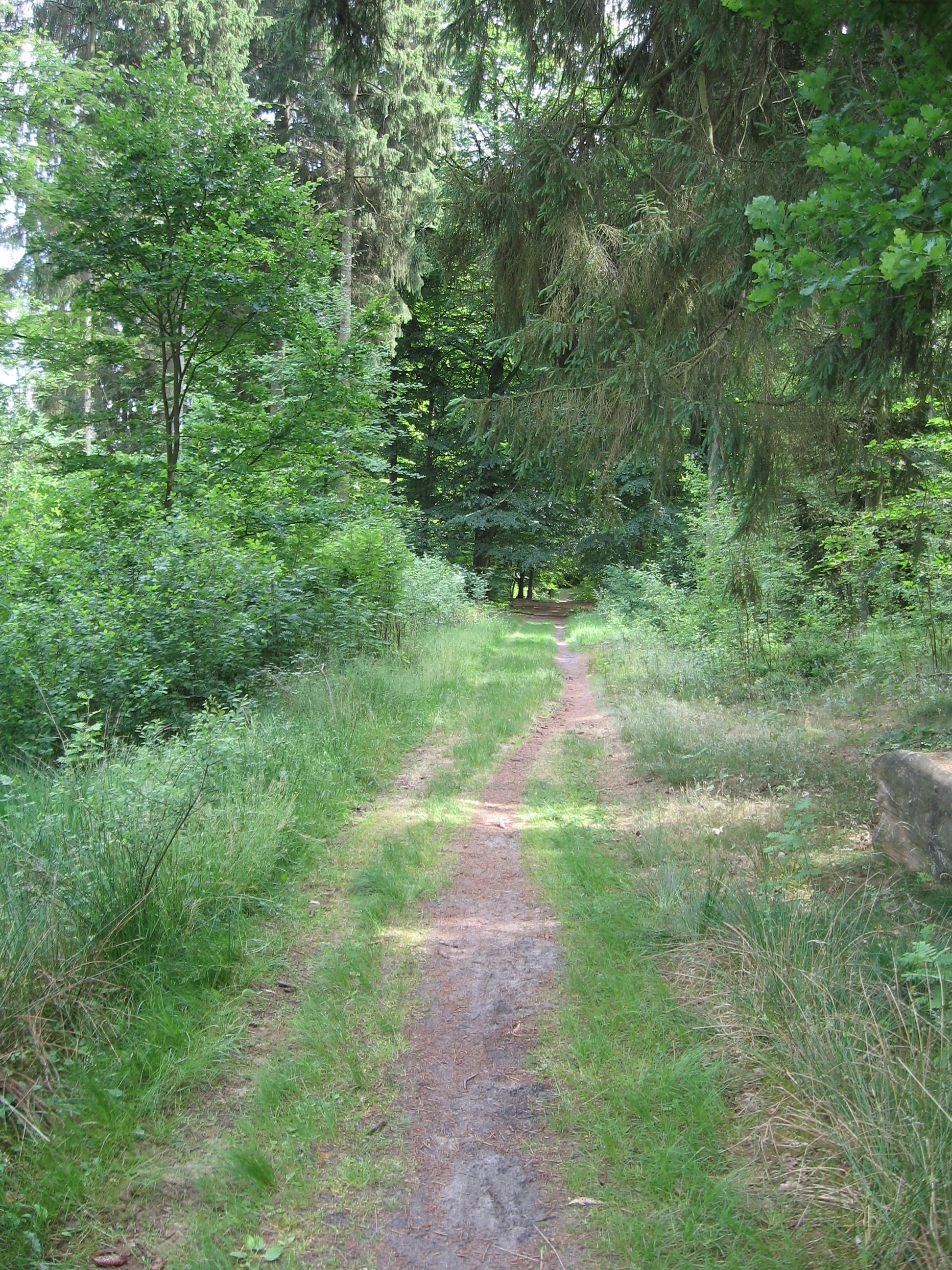 natur-wanderweg-lueneburger-heide