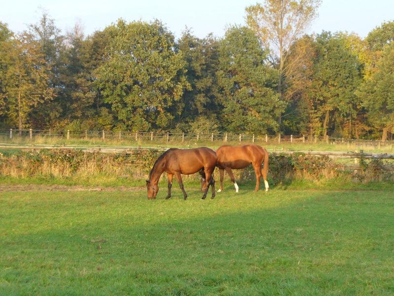 Pferde im Sander Bruch