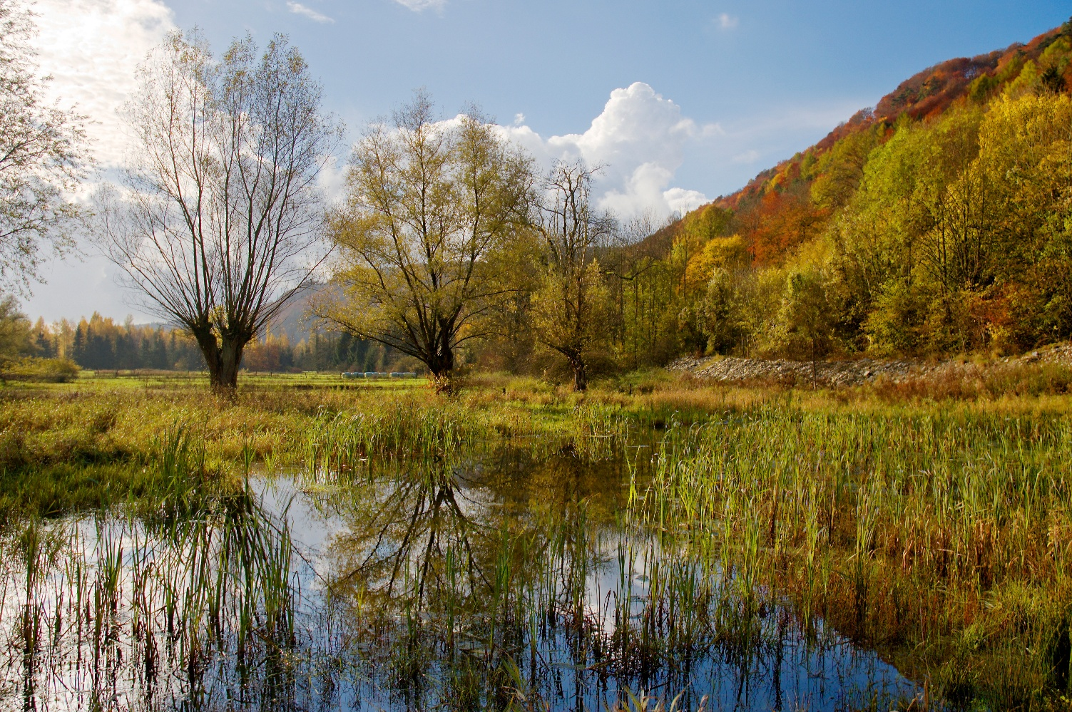 Herbststimmung am Taubenborn