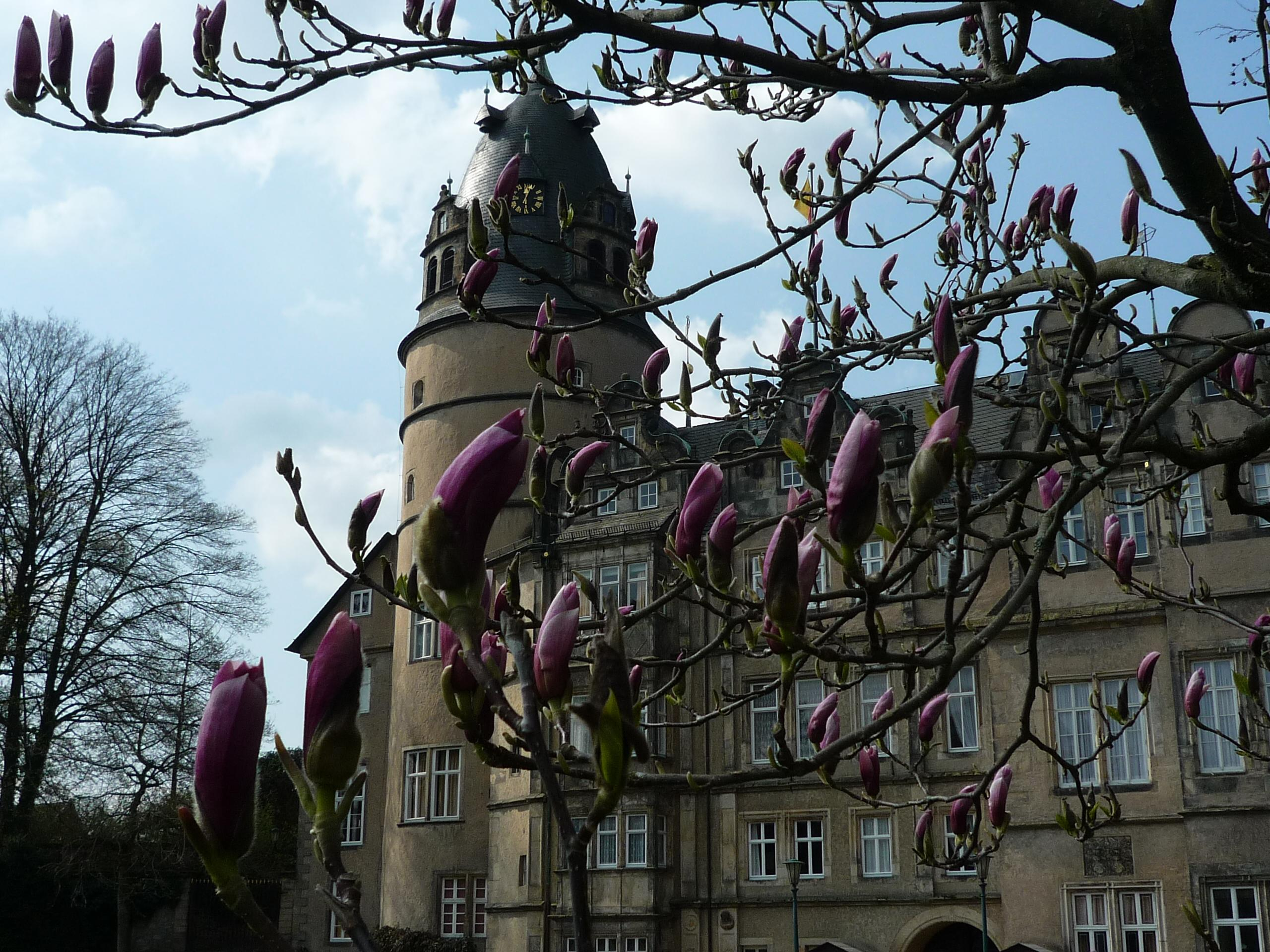 Fürstliches Residenzschloss Detmold, Frühling im Schloßpark