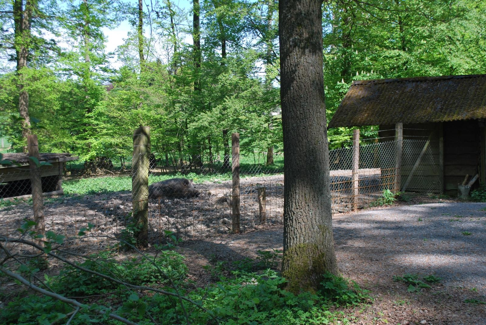 Wildgehege in Willebadessen