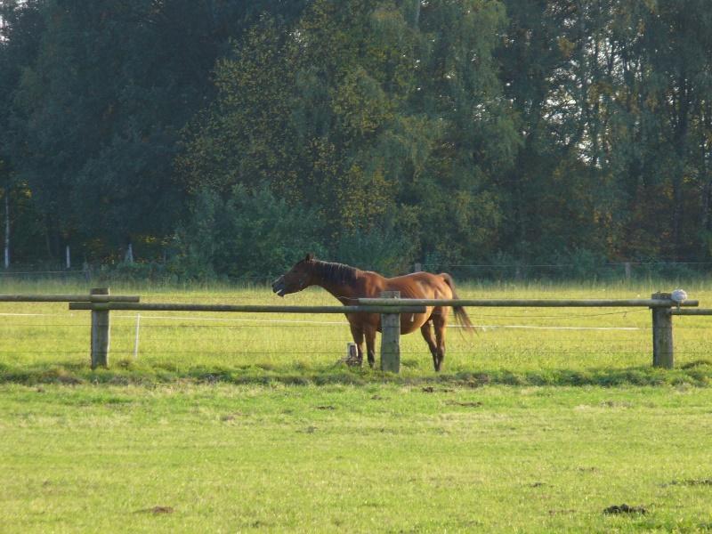 Pferdekoppel im Sander Bruch