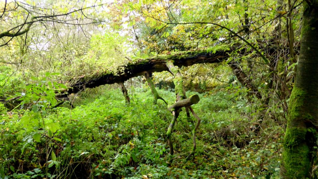 Natur am Bierenberg bei Blankenau