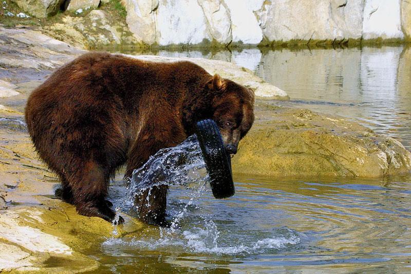 Bären Tierpark Olderdissen