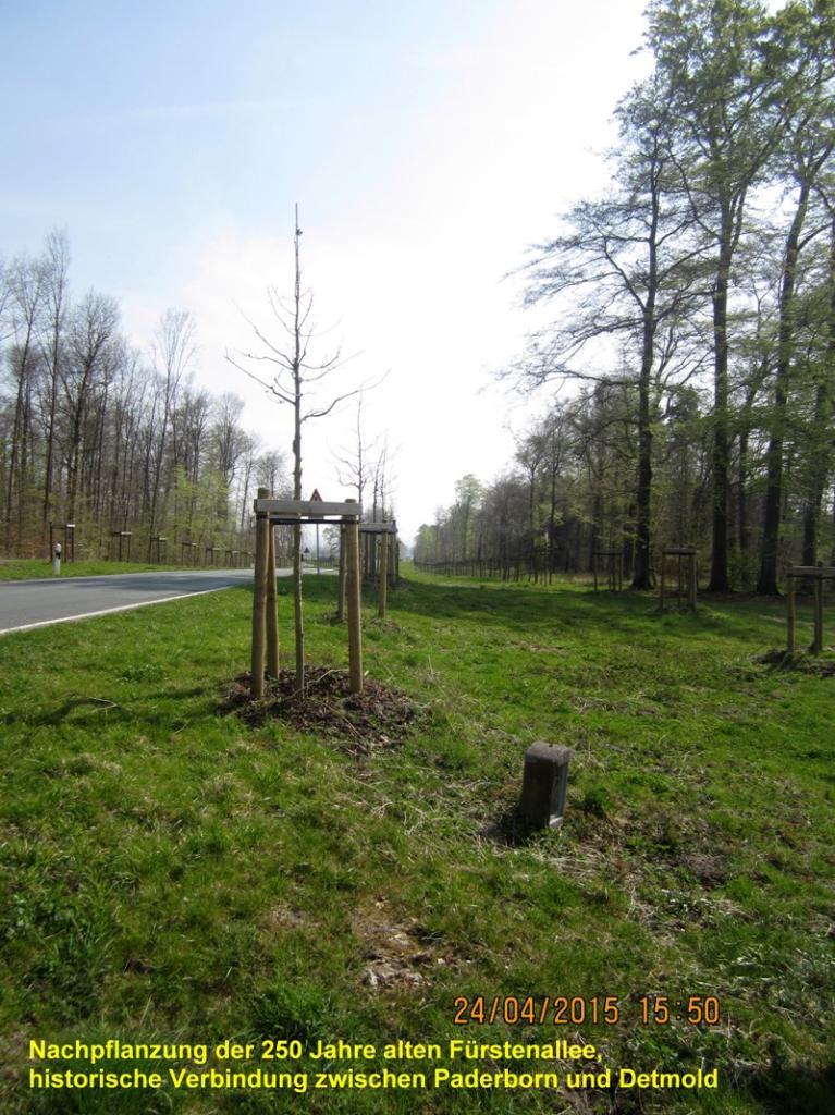 Fürstenallee - Neubepflanzung der historischen Straßenverbindung