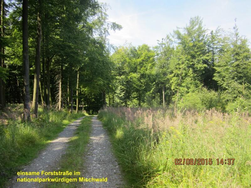 Aussichtsreiche Forststraßen am Barnacken