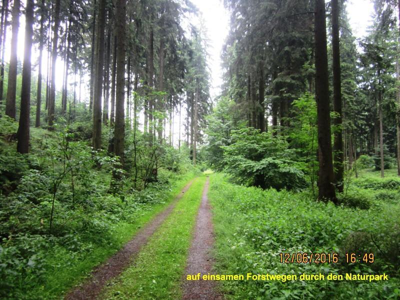 Naturweg im Zangenbachtal
