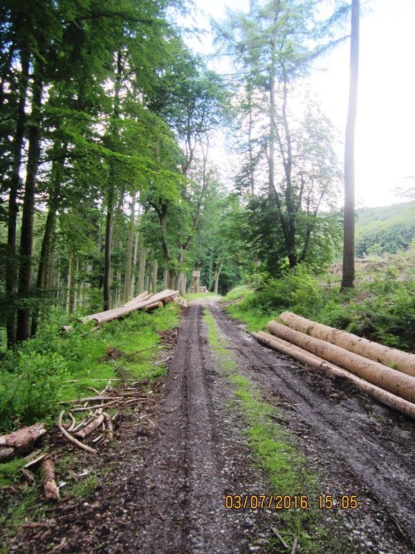 Abfahrt im Wirtschaftswald zwischen den Bergketten des Teutoburger Waldes