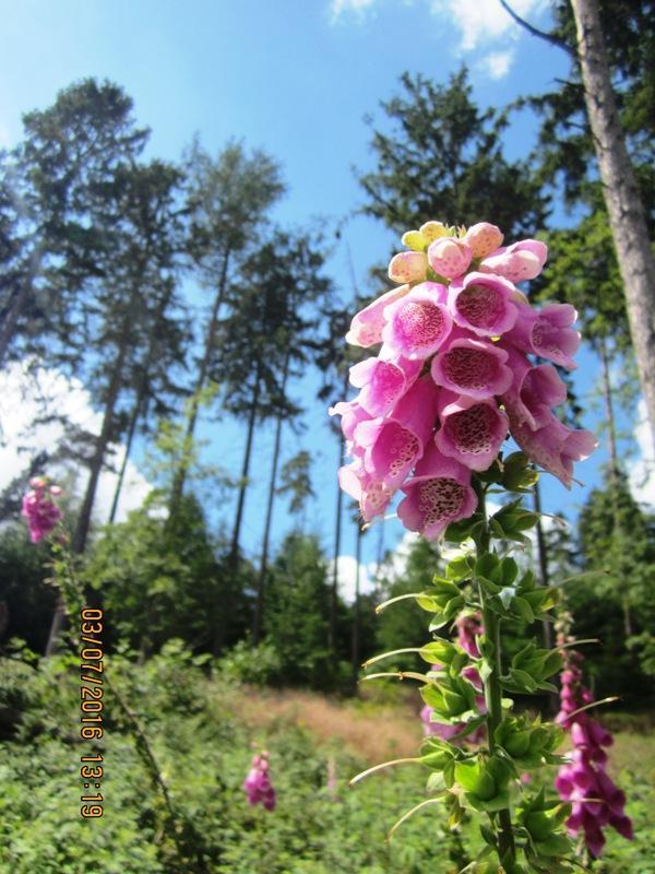 Im sommerlichen Wald im Bereich der Grotenburg