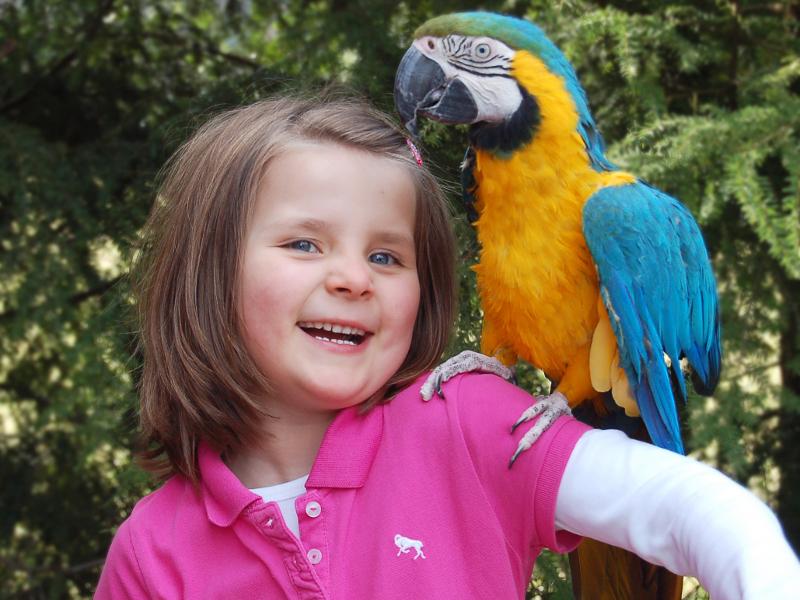 Papagei im Vogelpark Heiligenkirchen