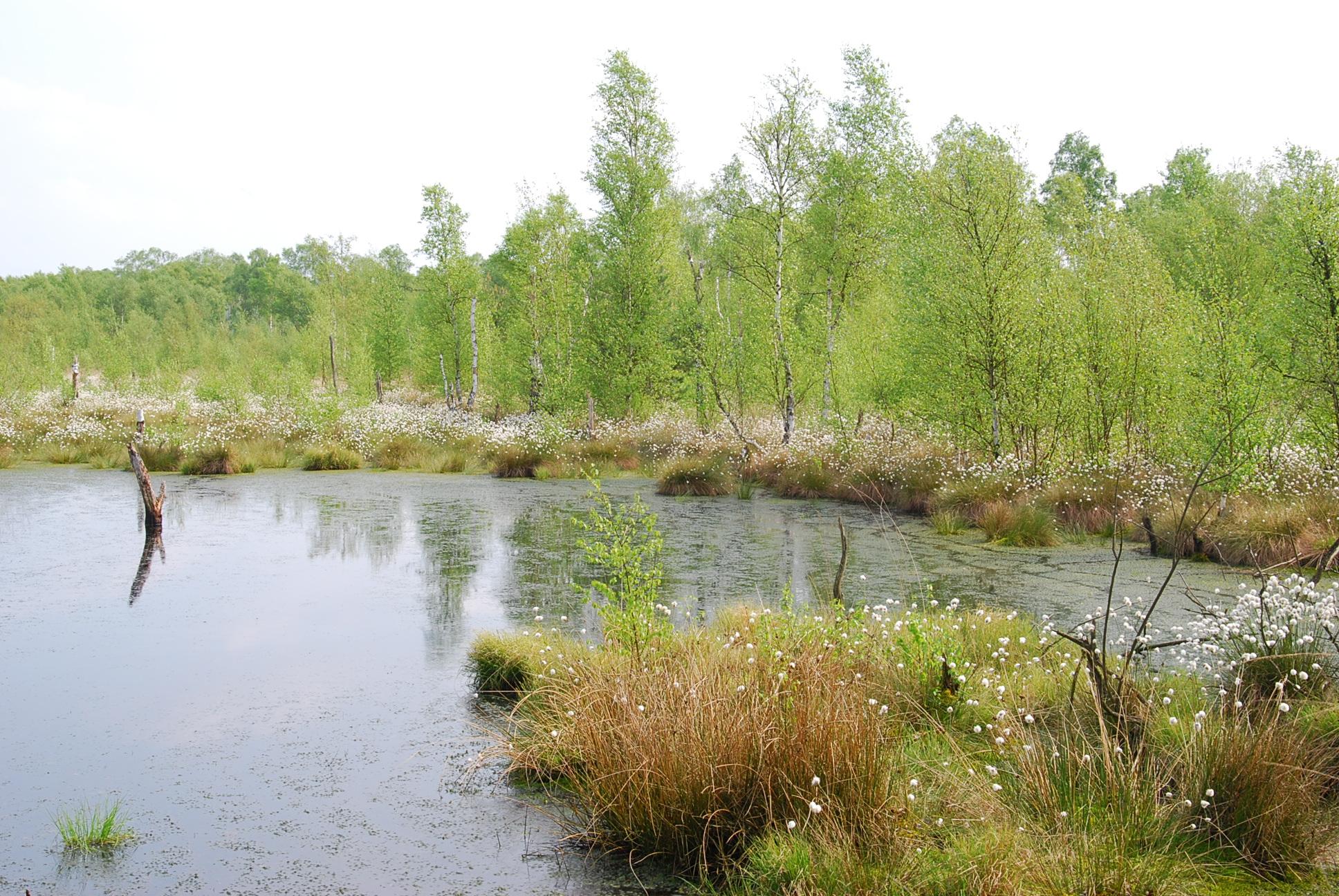Moorhennies Moor