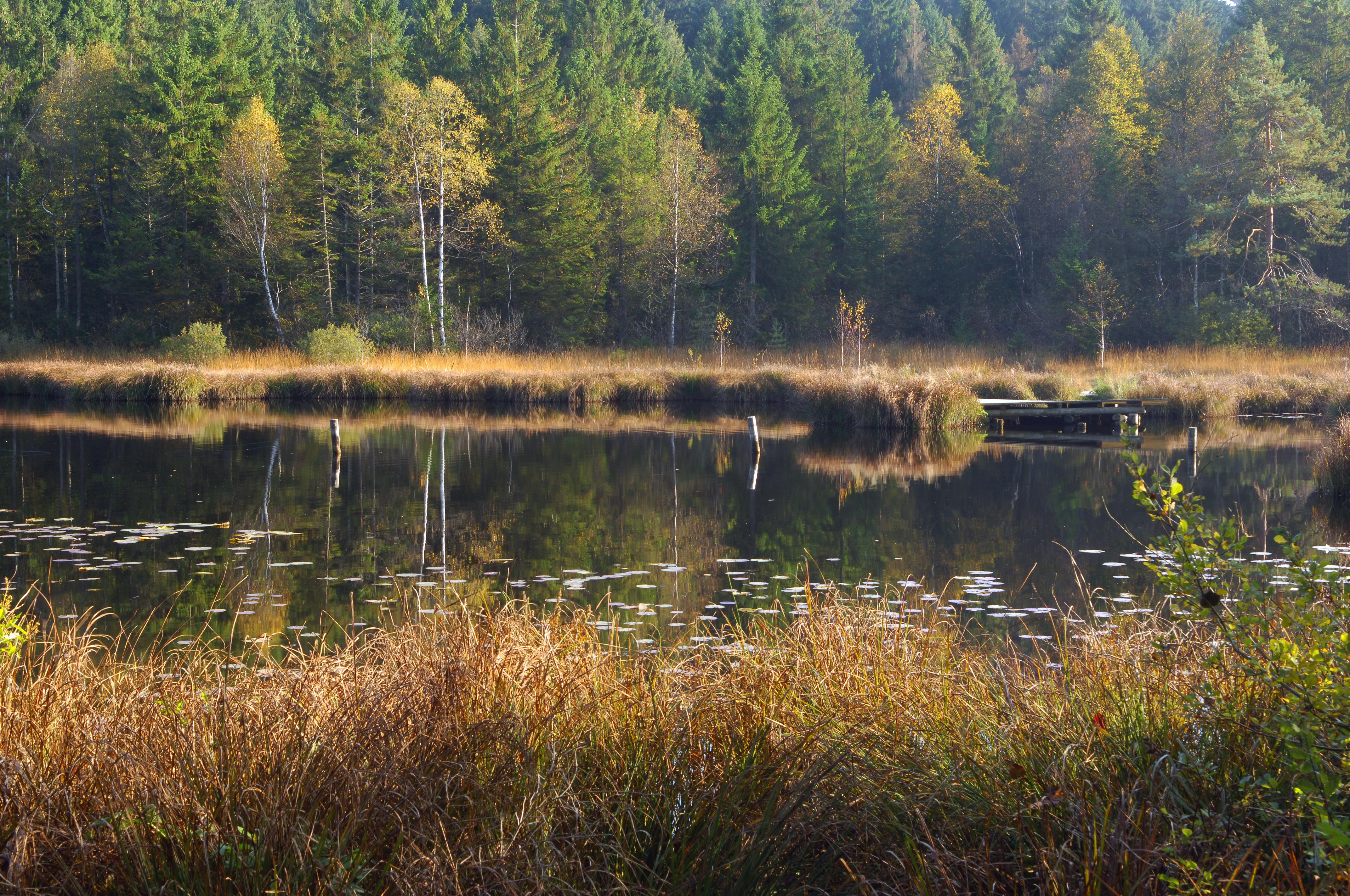 Waldsee Moor
