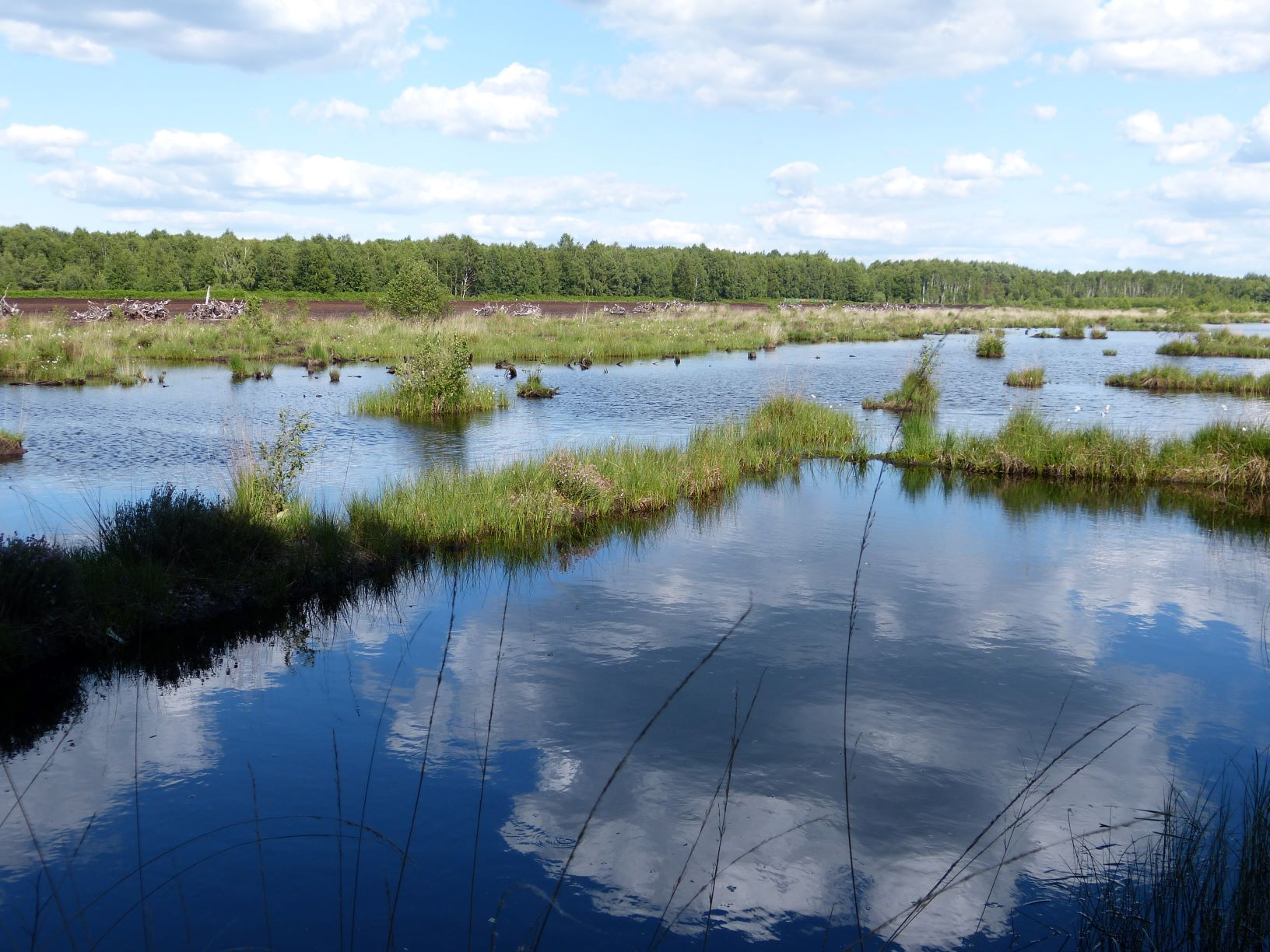 Renaturierungsbecken Großes Moor in Westerbeck