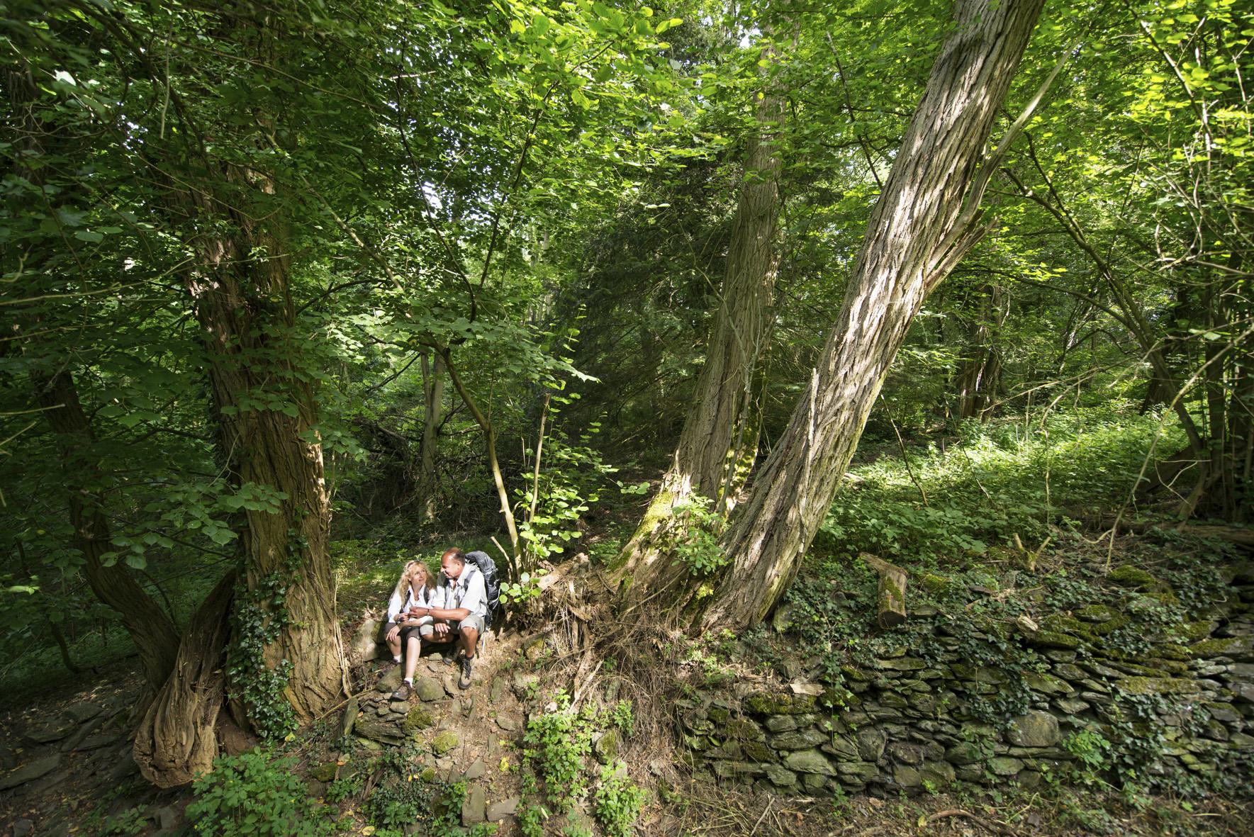 Rast im dichten Wald