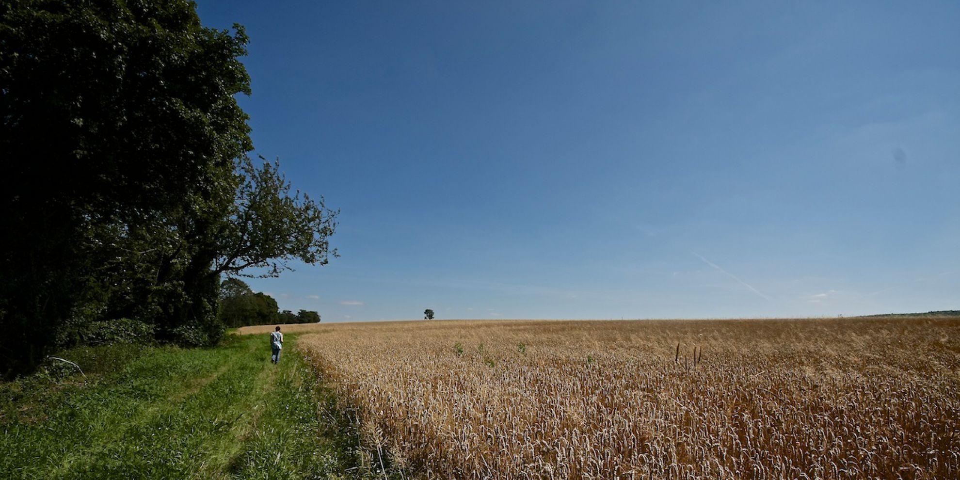 Vorbei an ruhigen Feldern