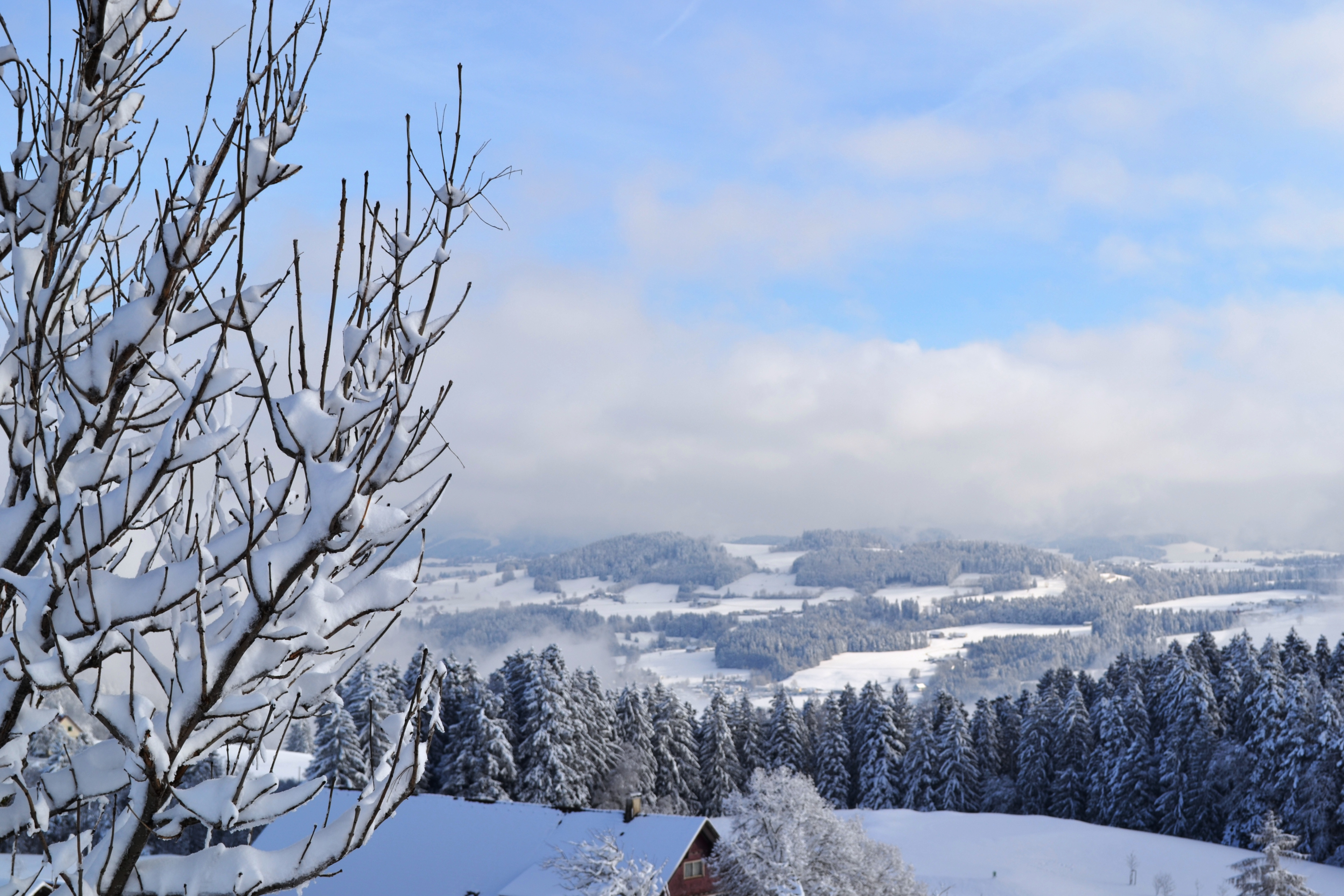 Blick vom Roderbühl im Winter