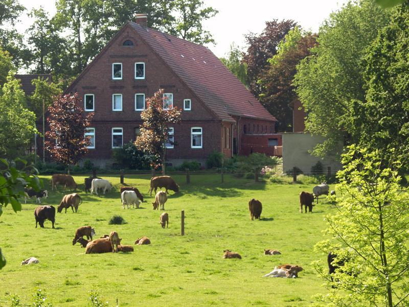 Kühe vor einem Bauernhof am Herzogweg
