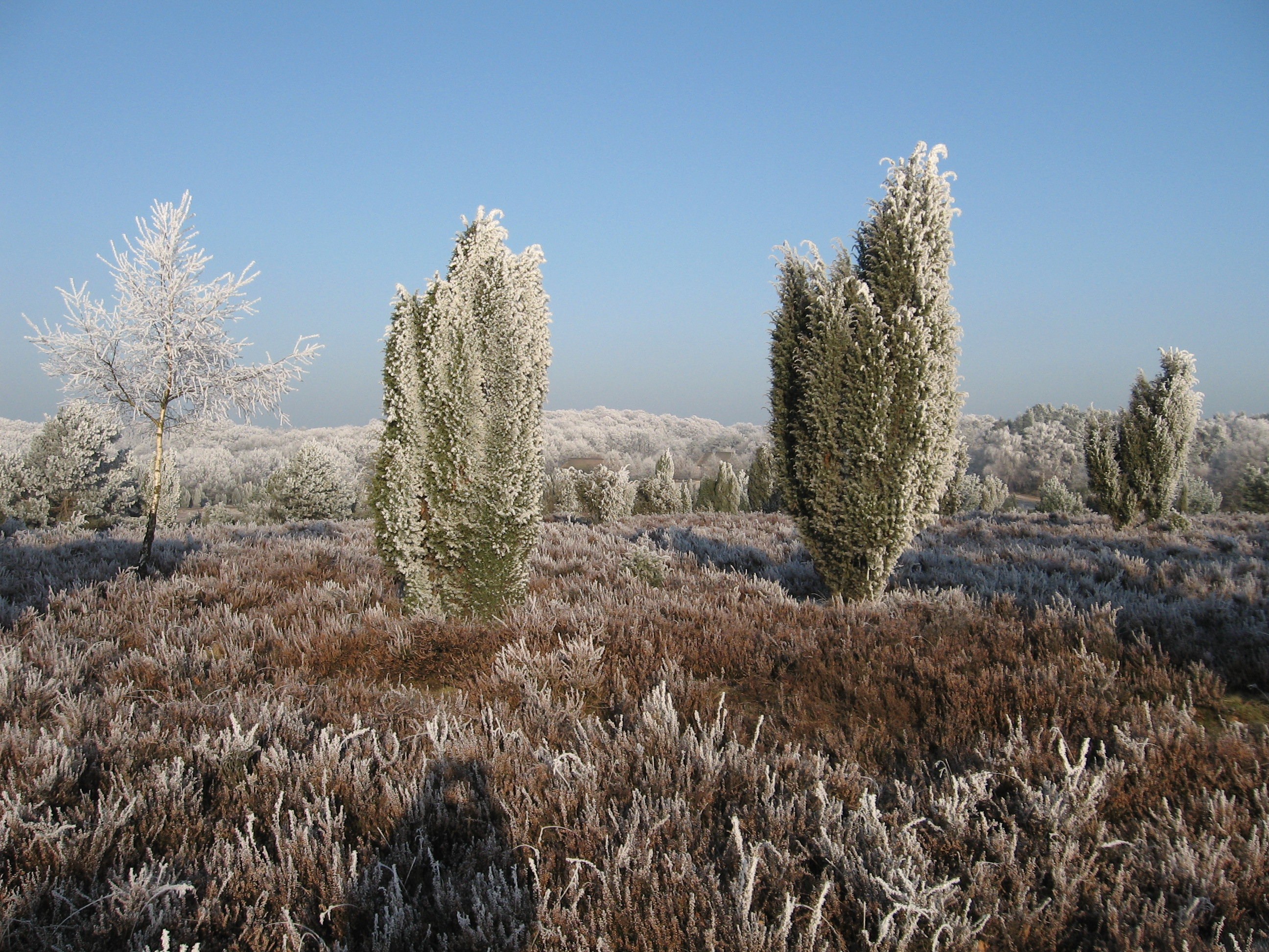 wacholder-heide-winter-haverbeck