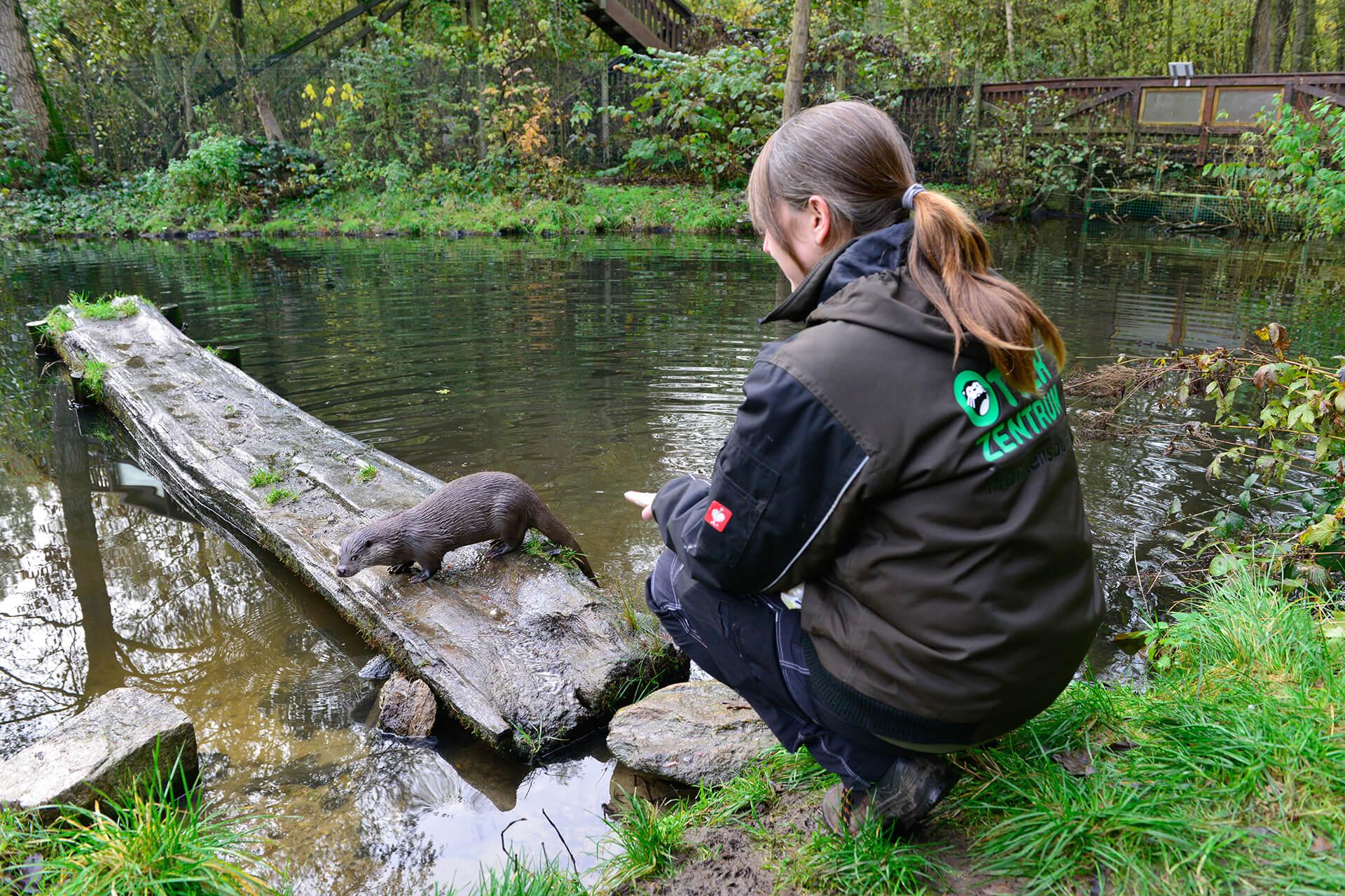 Tierfütterung im Otter-Zentrum