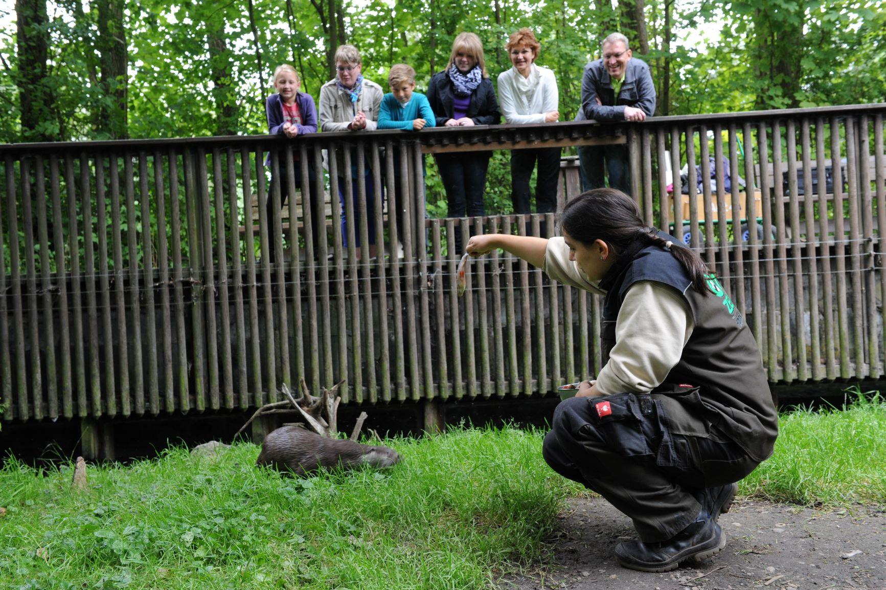 Fütterung im Otter-Zentrum