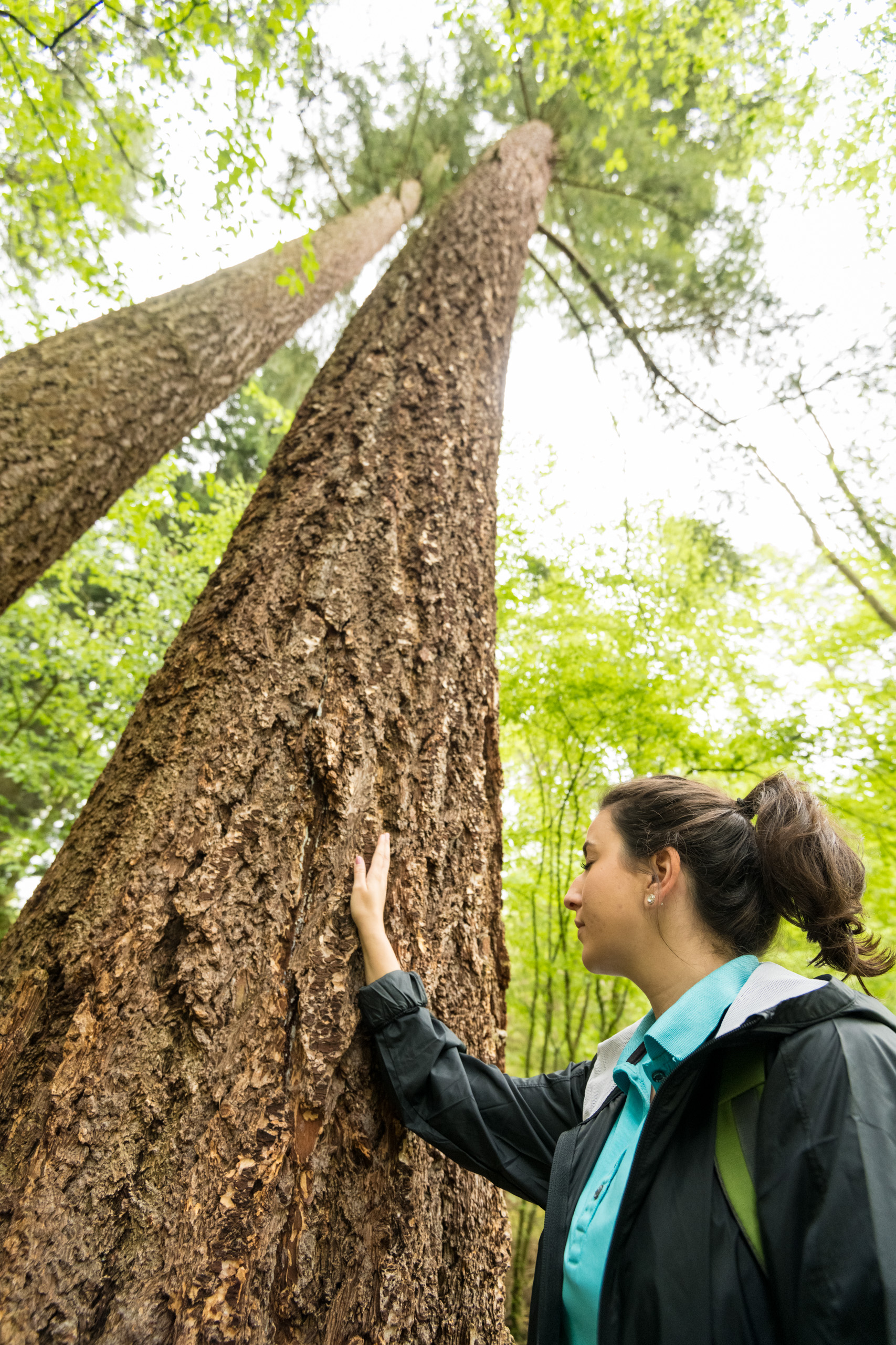 Berührung mit dem Baum