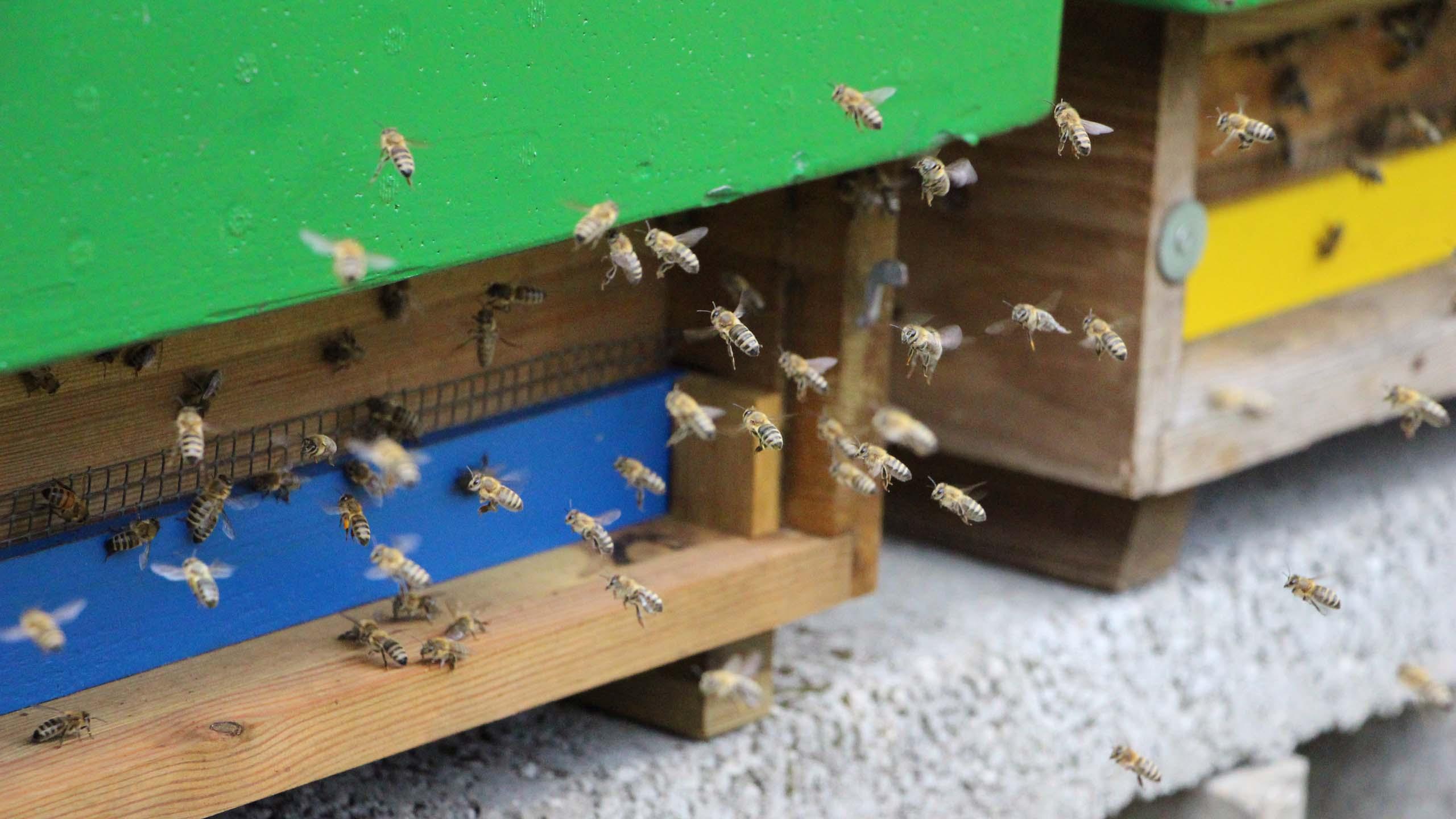 Celler Bieneninstitut