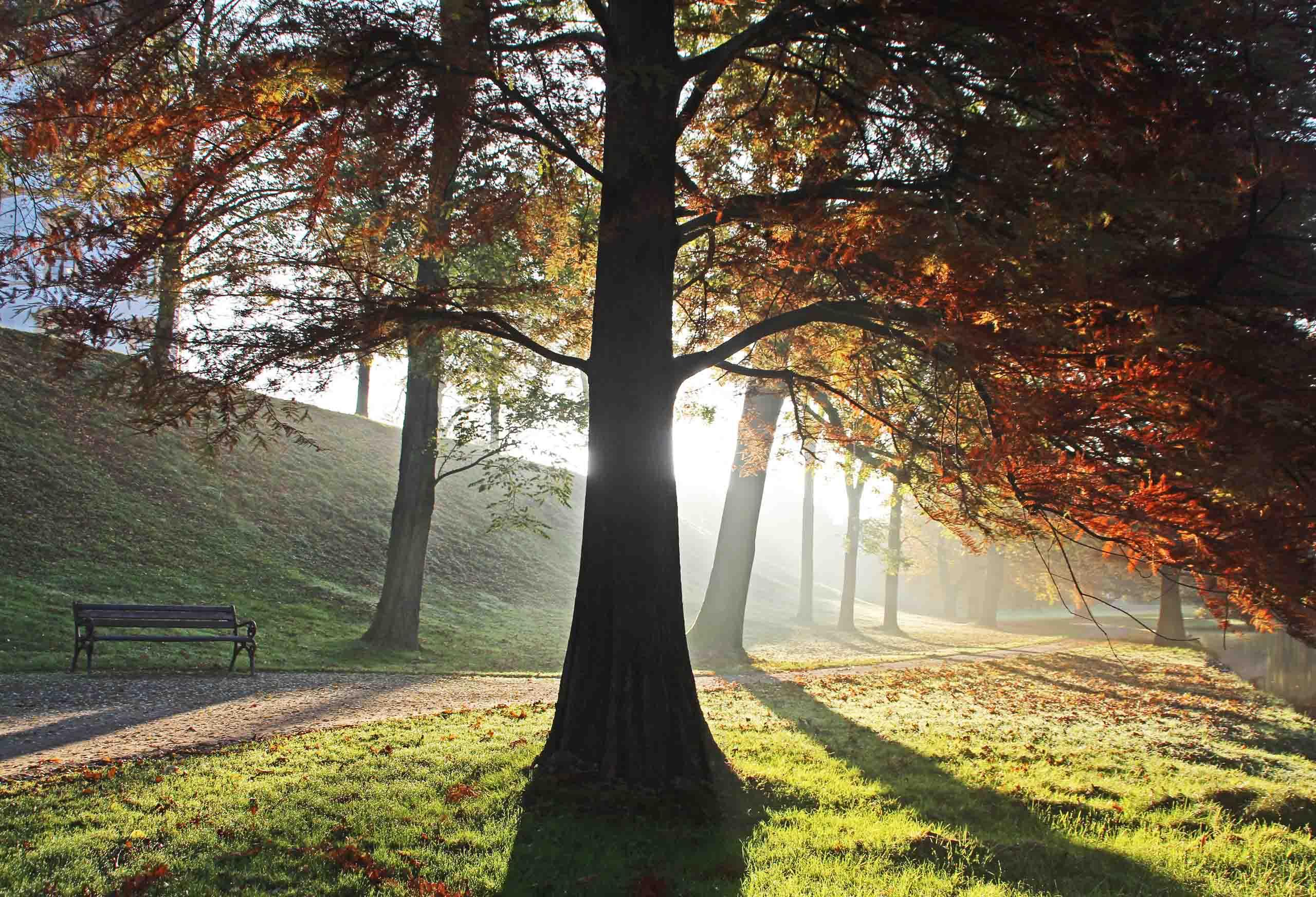 Herbstmorgen im Celler Schlosspark