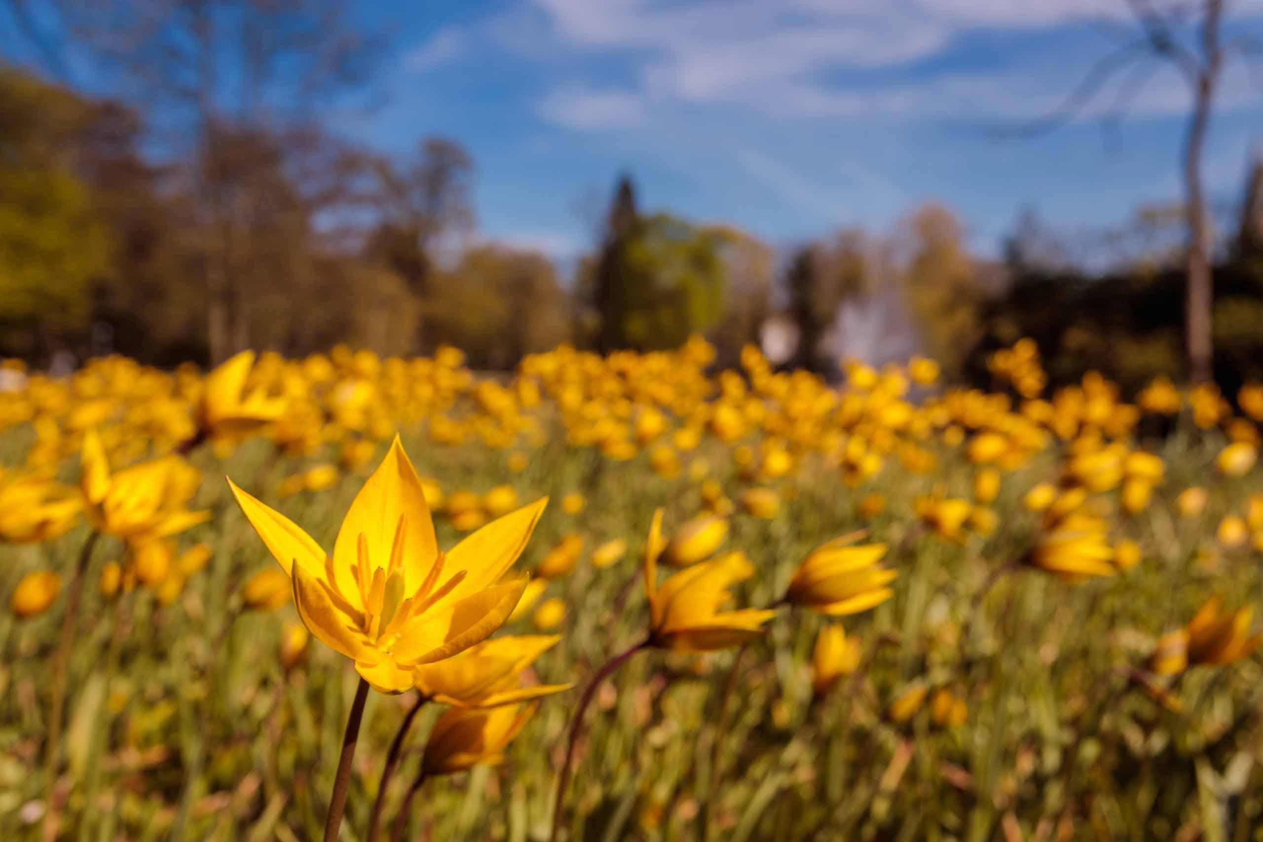 Blumenwiese im Französischen Garten