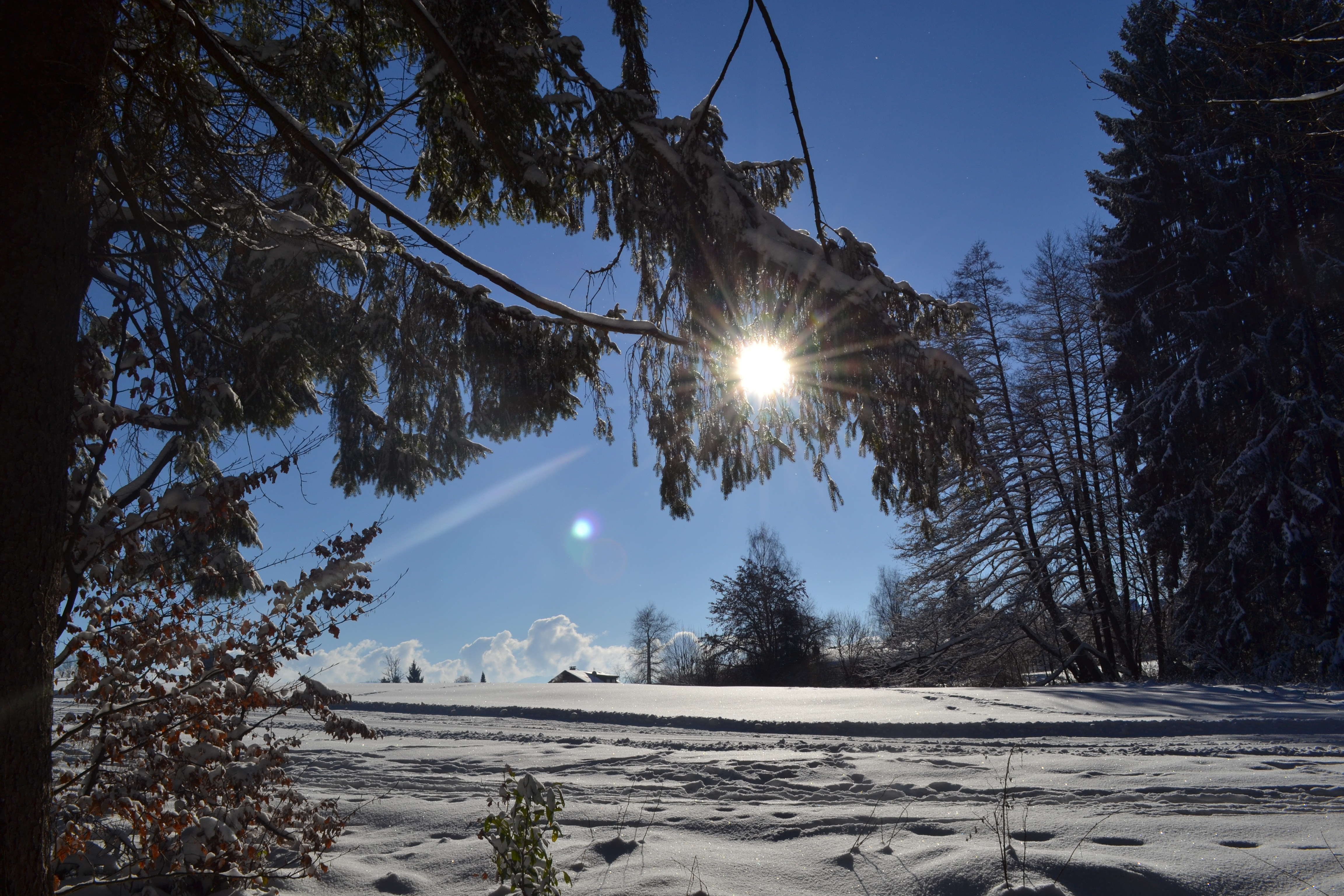 Winterwanderweg_Lindenberg-Goßholz