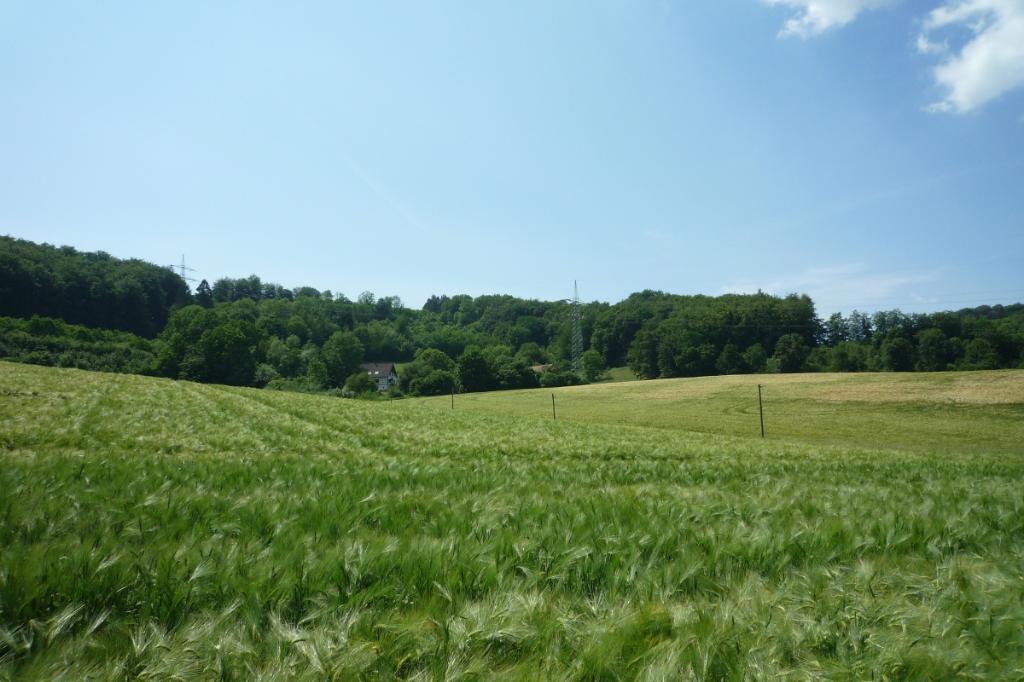 Wald- und Wiesenlandschaft