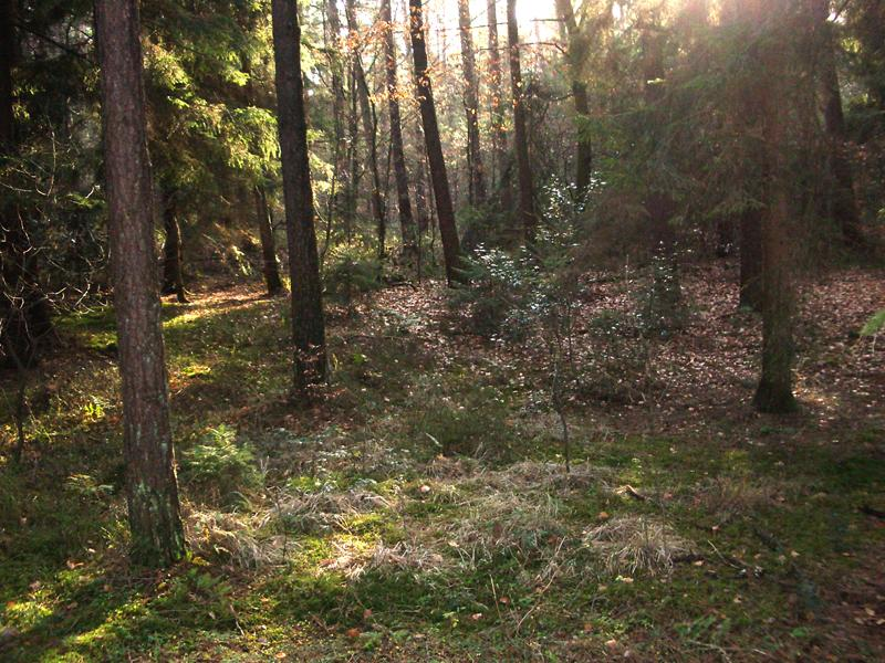 Holter Wald im Herbst