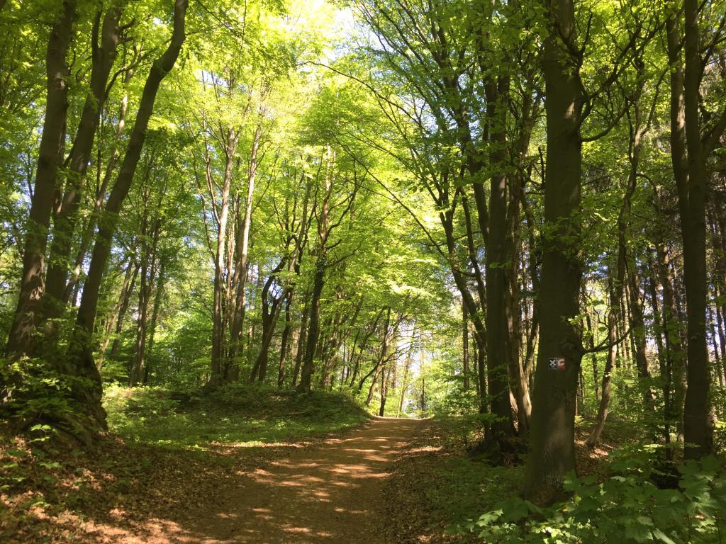 Naturbelassener Wald in Häger