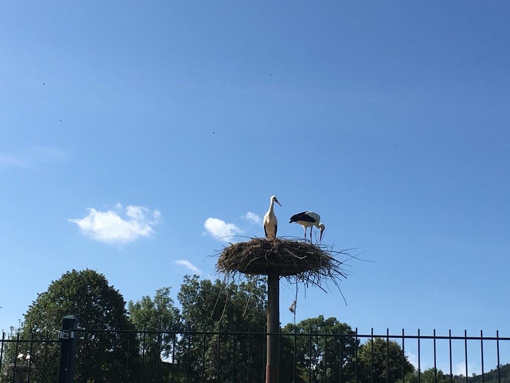 Storchenstation Elbrinxen