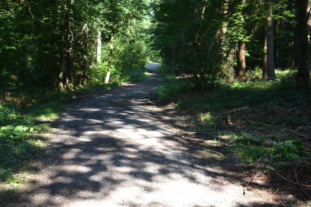 Wanderweg am Bilster Berg