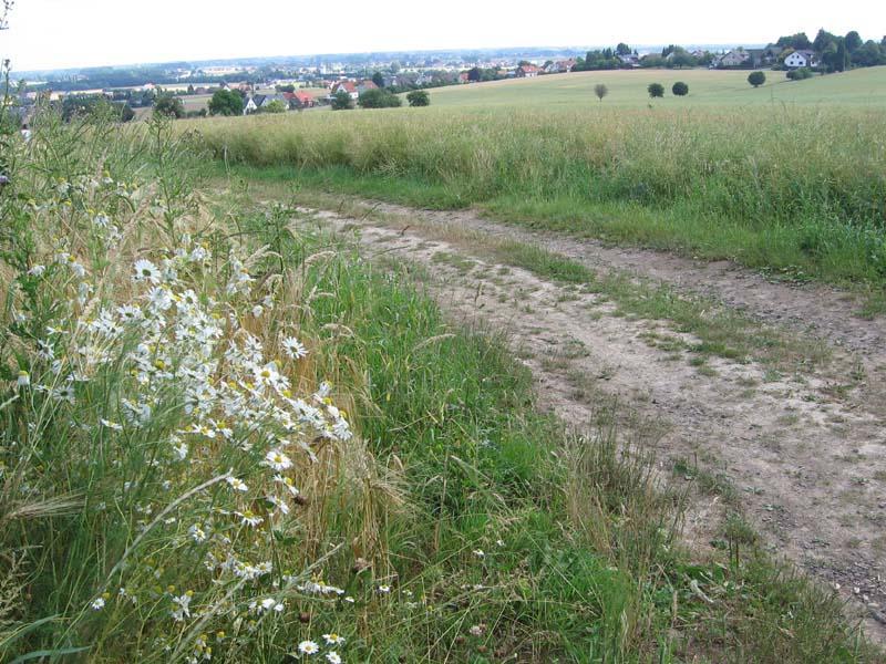 Wanderweg Limberg 1