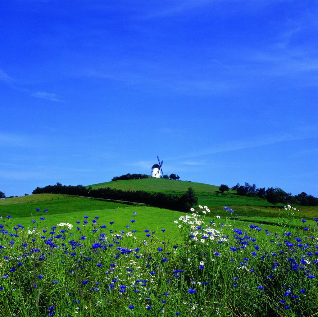 Windmühle in Bavenhausen