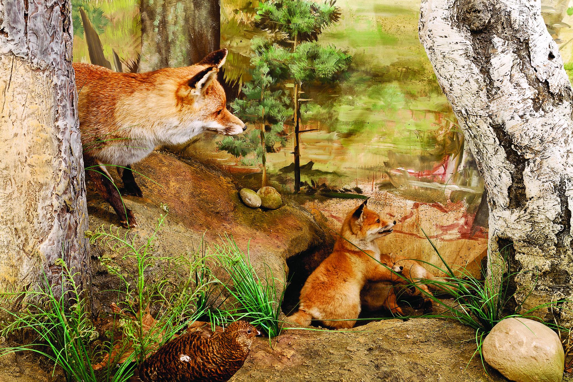 Diorama von Familie Fuchs