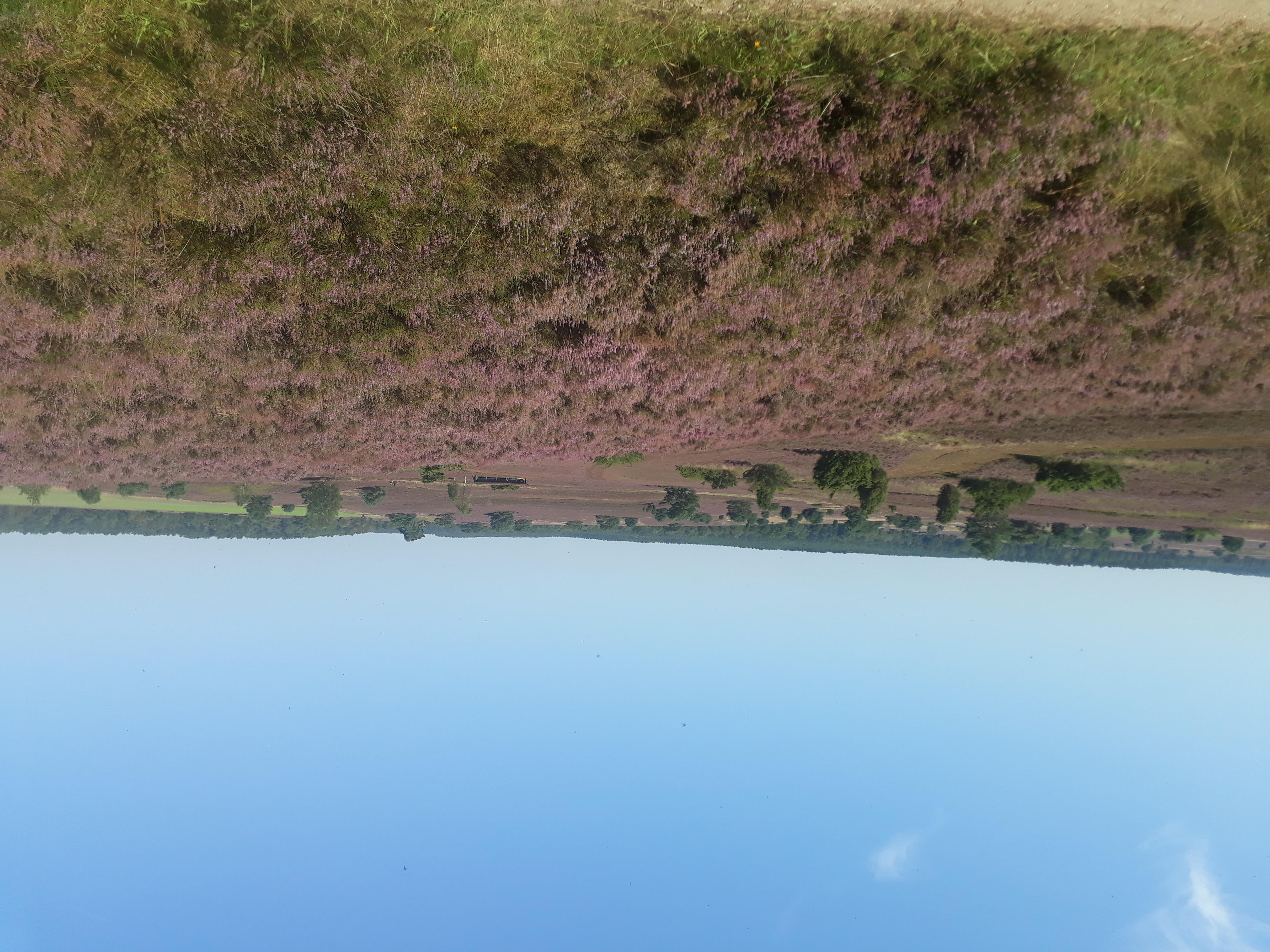 ausblick-kutschfahrt-natur